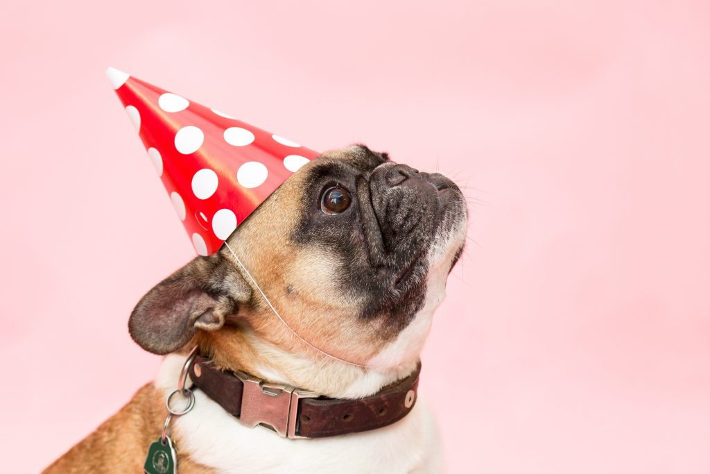 pug wearing party hat
